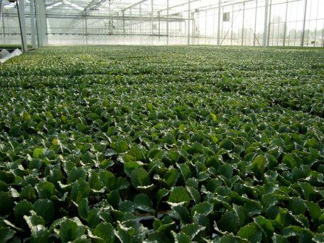 plants-froids