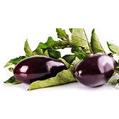 aubergines-emeraude-plants-mini