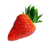 plants-fraise-emeraude-plants-miniature