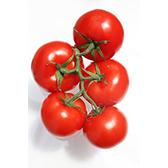 tomates-emeraude-plants-miniature